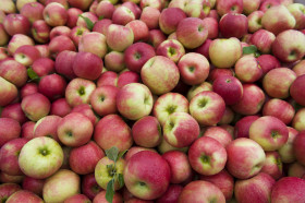 Apples for sale at an orchard in Upstate New York