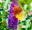 Butterfly visiting the buddleia